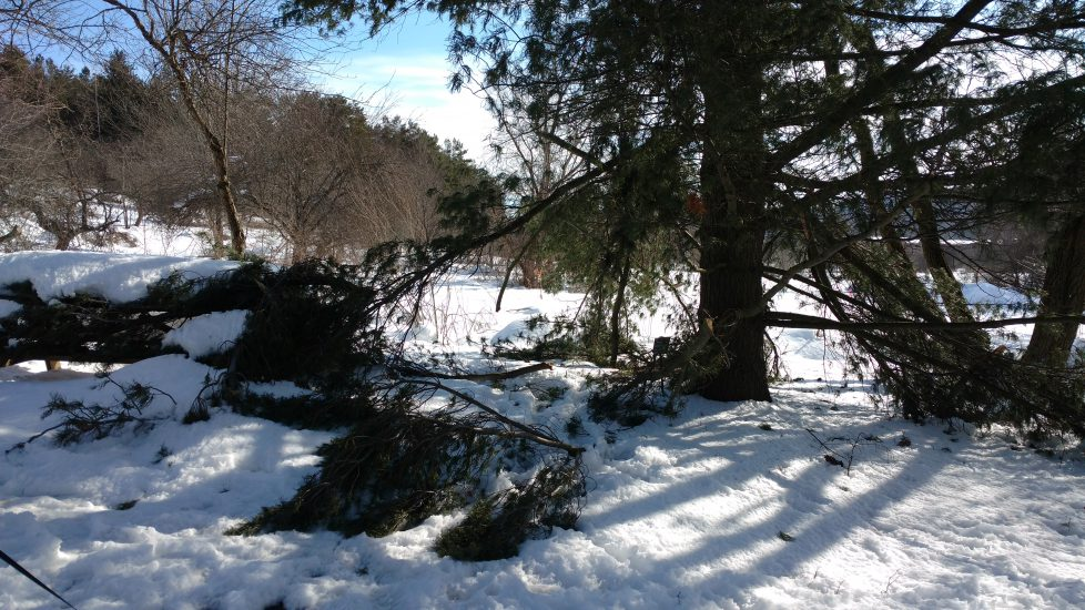 Winter Storm Clean Up Days Scheduled for May 2018